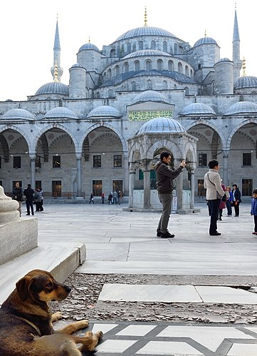 Stray dog at Blue Mosque in Istanbul
